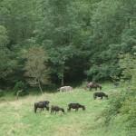 Donkeys arrive