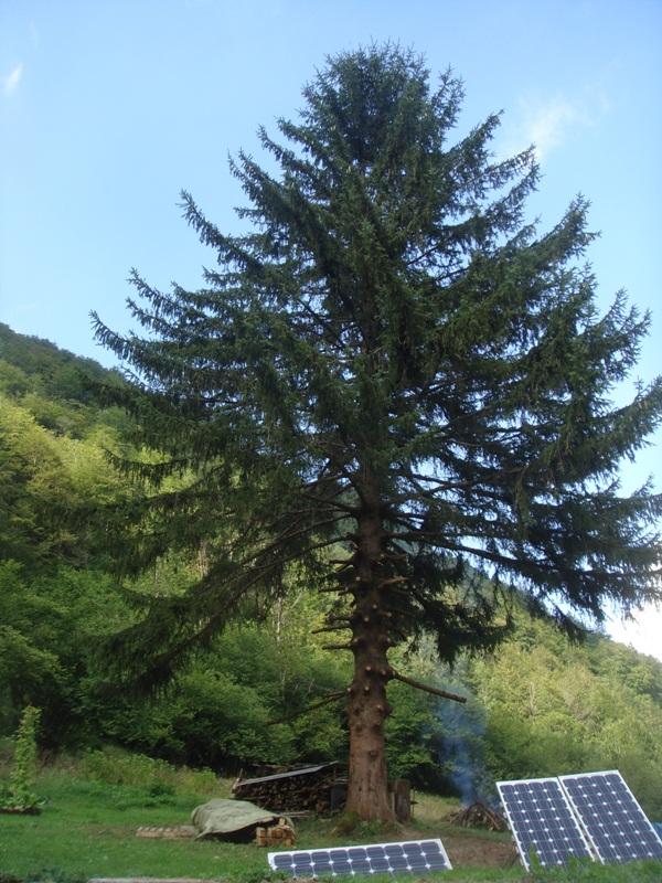 tree felling 5