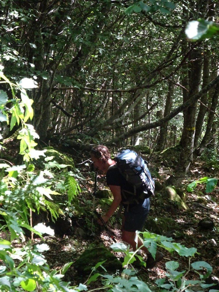 Up through the woods Peyralade