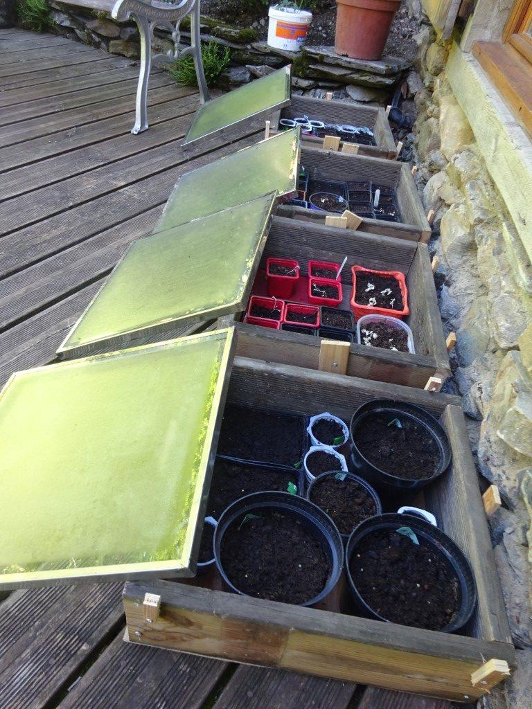 Cloches come solar ovens